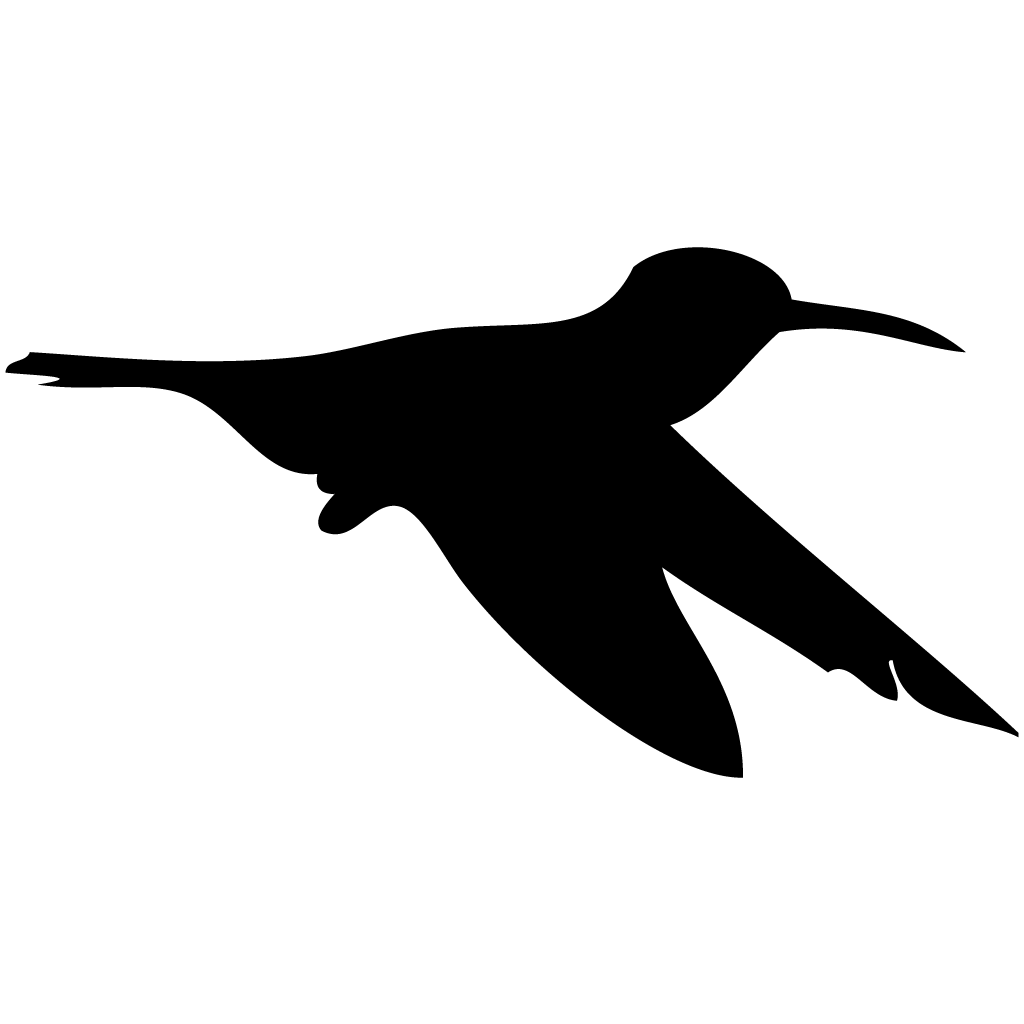 Habitat drawing hummingbird. Rufous overview all about