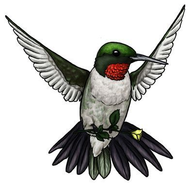 Hummingbird clipart rufous hummingbird. Images on favorite craft
