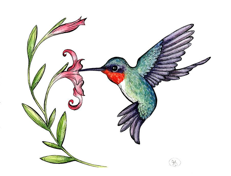 Hummingbird clipart rufous hummingbird. Rubythroated jpg hummingbirds rubythroatedhummingbirdclipartjpg