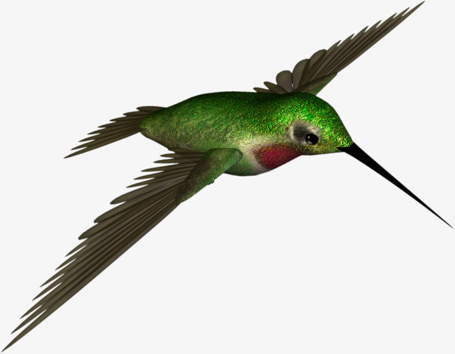 Hummingbird clipart rufous hummingbird. Green bird real png