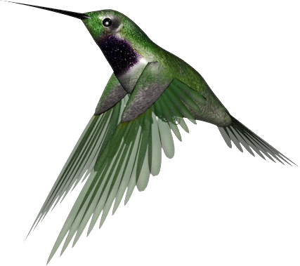 Hummingbird transparent. Png clipart mart