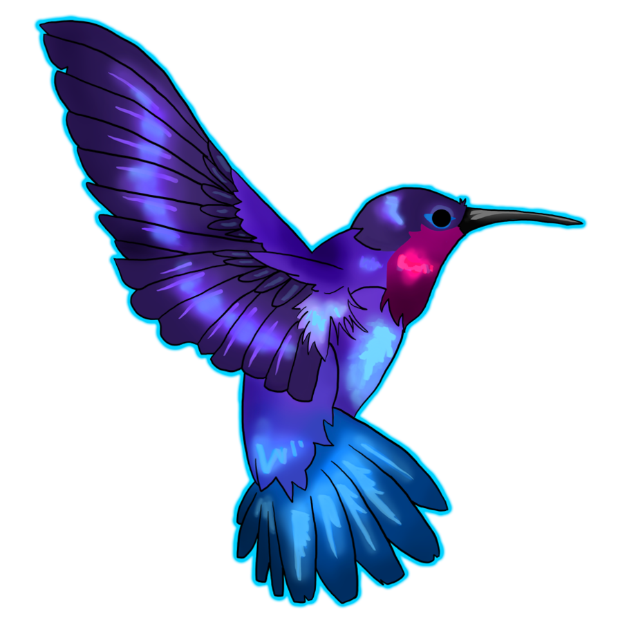 Hummingbird transparent. Png free images only