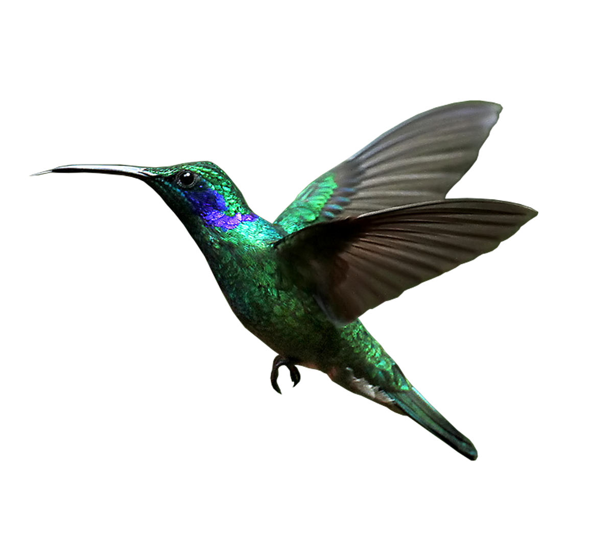 Hummingbird transparent. Background png mart
