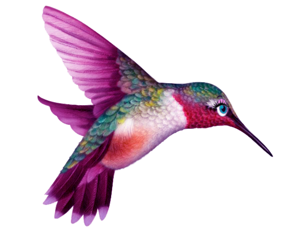 Hummingbird transparent. Meet tara wallace of