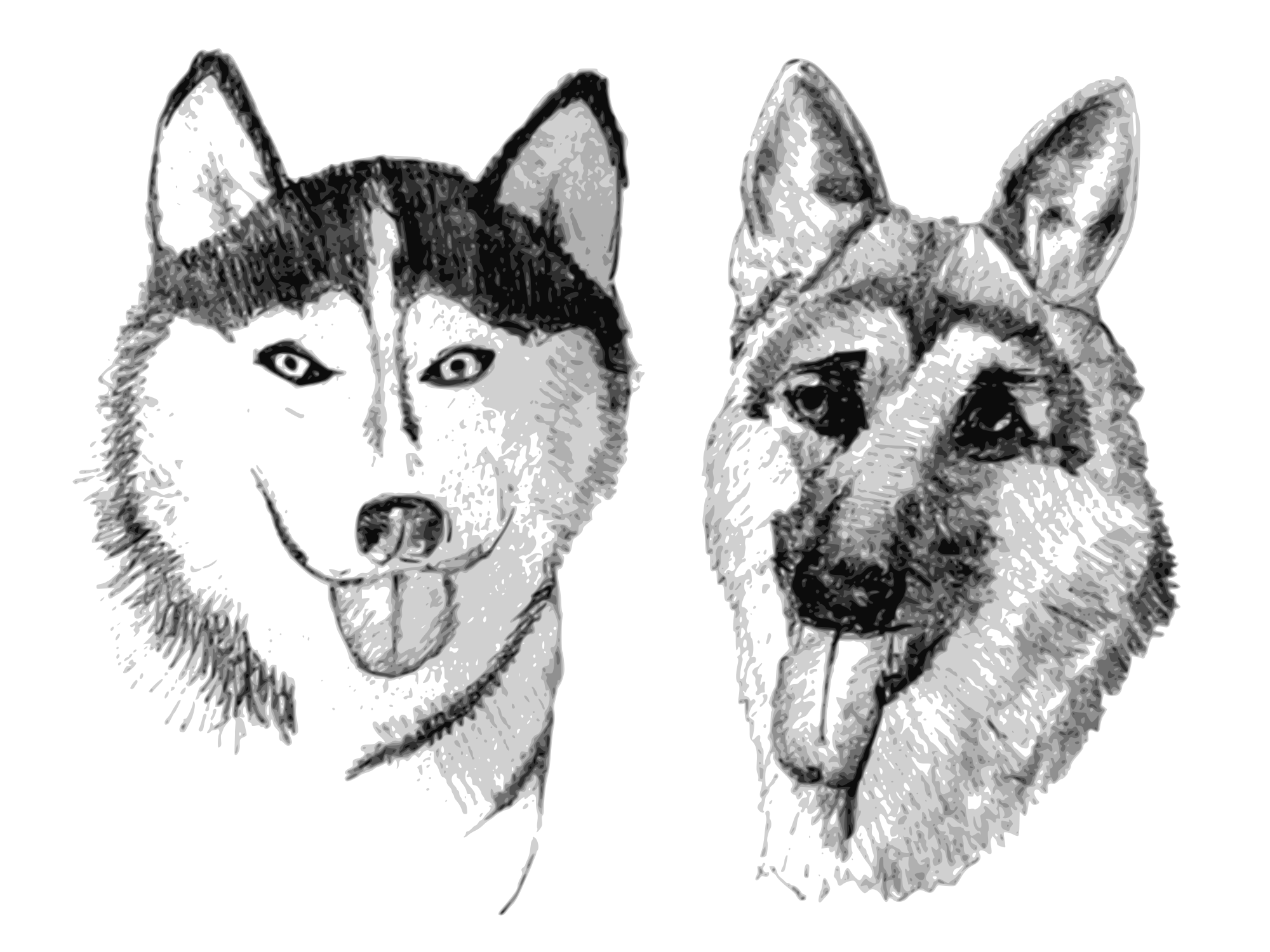 Husky svg. File siberian german shepherd