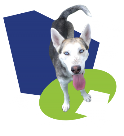 Husky transparent adoption. Information cell dogs