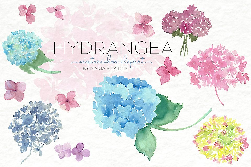 Watercolor clip art illustrations. Hydrangea clipart hydrangea flower clipart transparent library