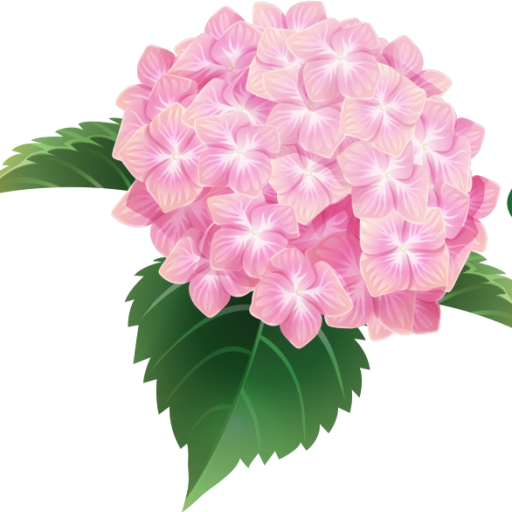 Hydrangea transparent. Home the penny mchenry