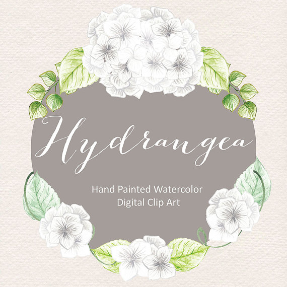 Watercolor flowers white . Hydrangea clipart hydrangea flower freeuse
