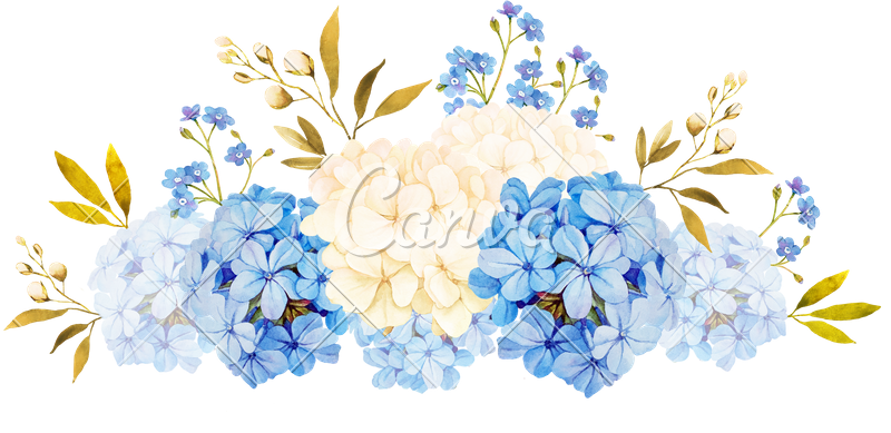 Blue white jadmine rose. Hydrangea transparent watercolor clip freeuse