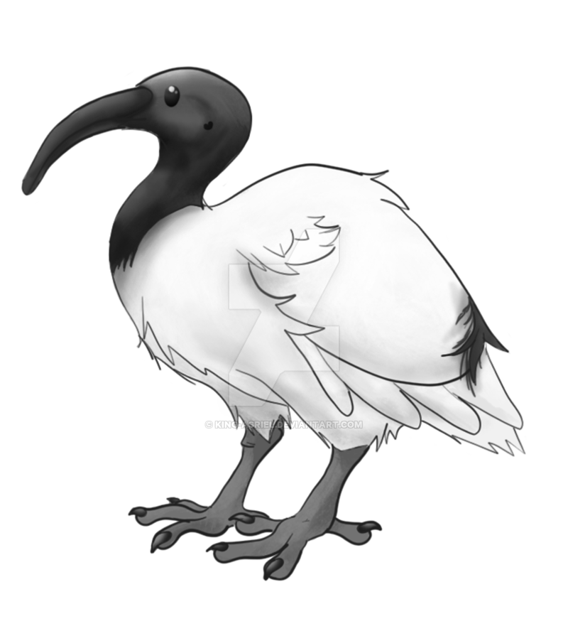 Ibis drawing illustration. By king asriel on