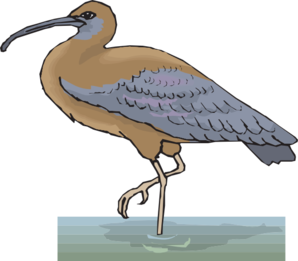 Ibis drawing sacred. Free cliparts download clip