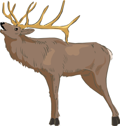 Idaho drawing elk. Activity enormous science trek