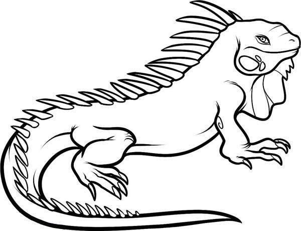 Green Iguana Coloring Pages - Get Coloring Pages | 460x600