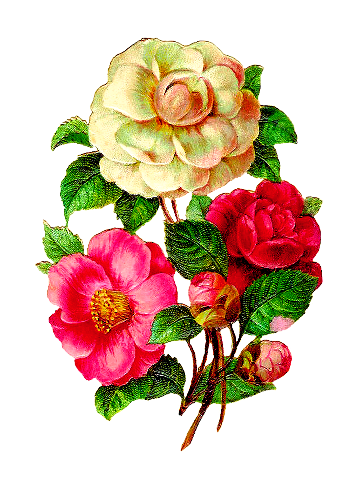 Bouquet vector rose illustration. Afbeeldingsresultaat voor vintage flowers