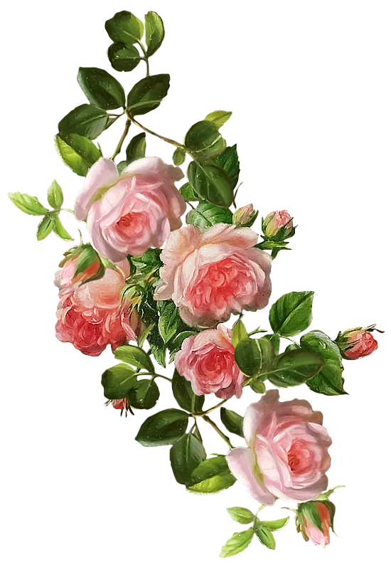 Illustrated floral bouquet png