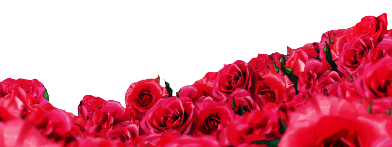 Rosas png. By family renders on