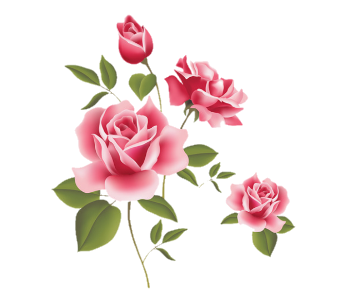 Rosas png. Rosa sticker stickerrosas beautiful