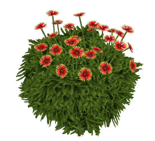 Indian blanket flower png. Jimmyzhoopz zt download library