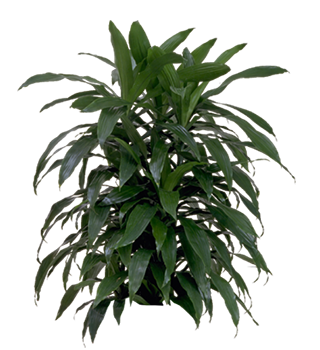 Indoor plants png. Plant gallery house office