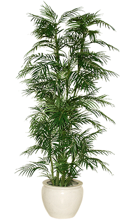 Indoor plant png. Air by cricket dale