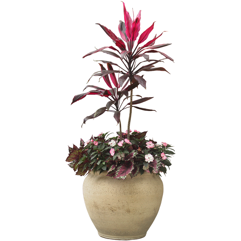 Indoor plants png. Houseplant flowerpot plant potted