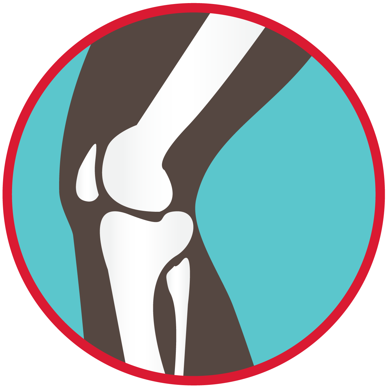 Knee clipart knee joint. Sports medicine products ankle