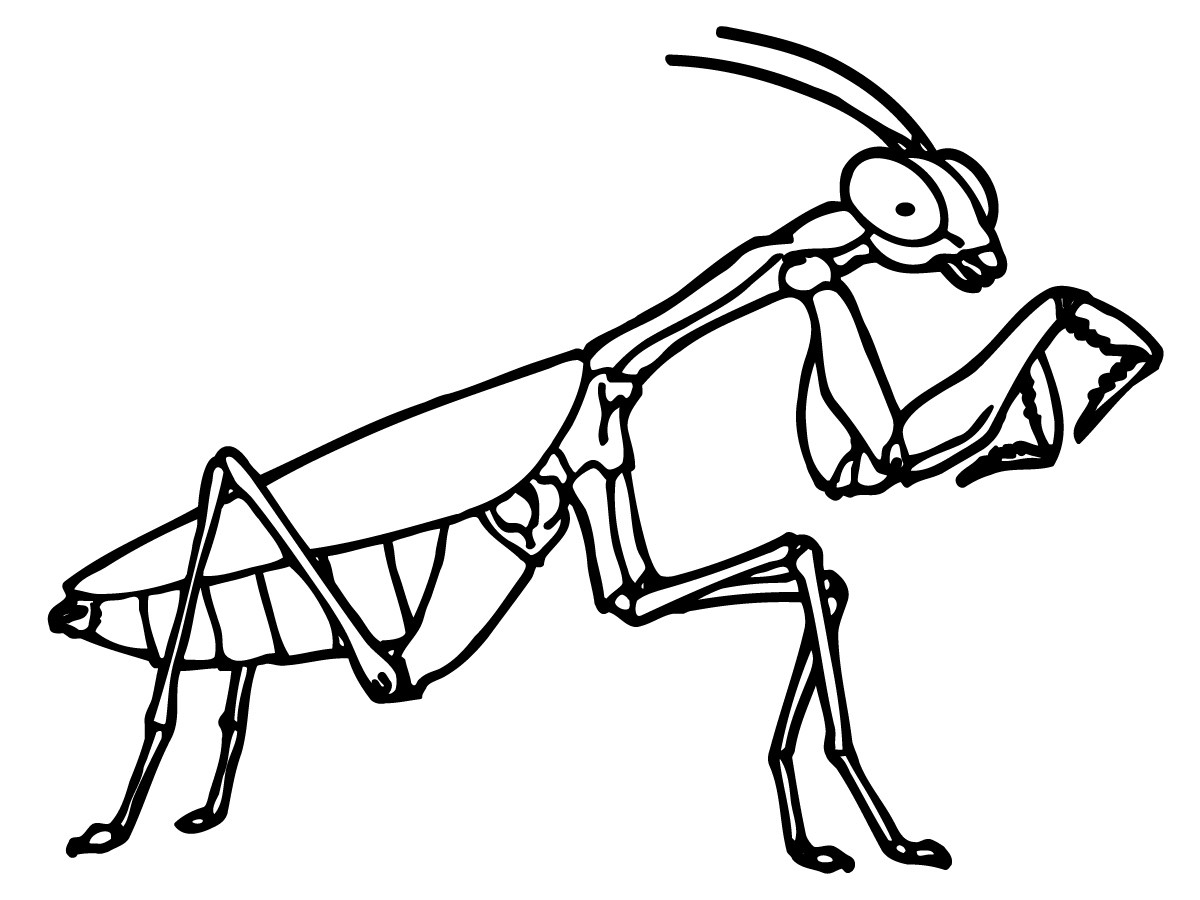 INSECT coloring pages - 30 free Insects and Bugs coloring pages ...   900x1200