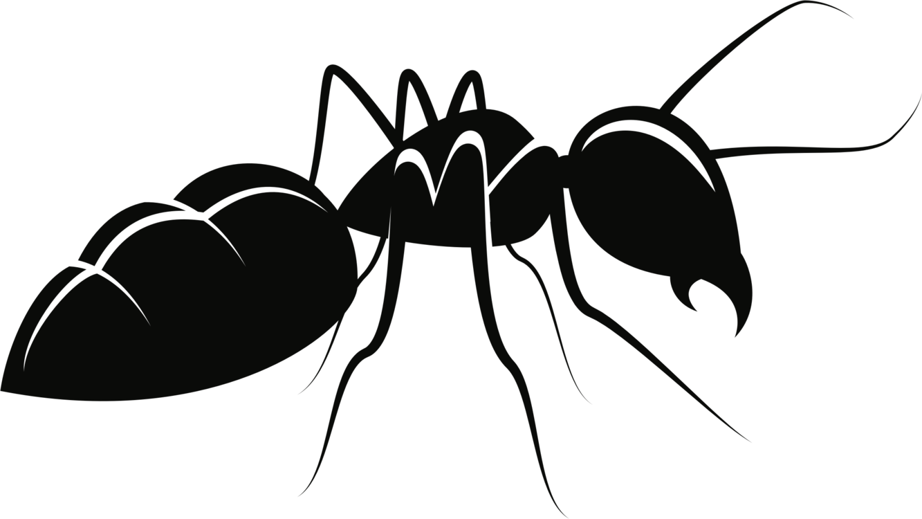 Ant drawing png. Carpenter insect mosquito free