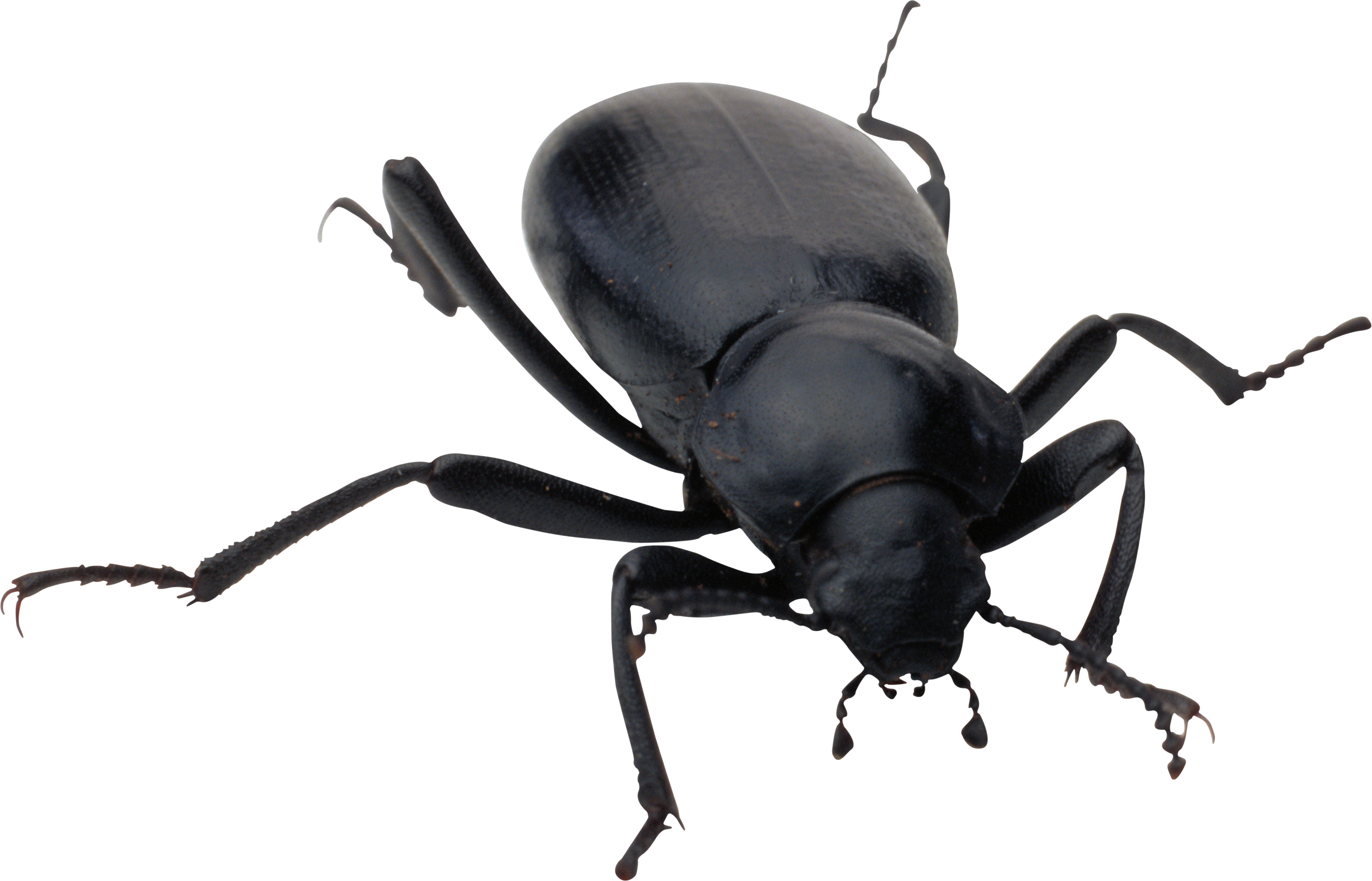 Bug transparent. Hd png images pluspng