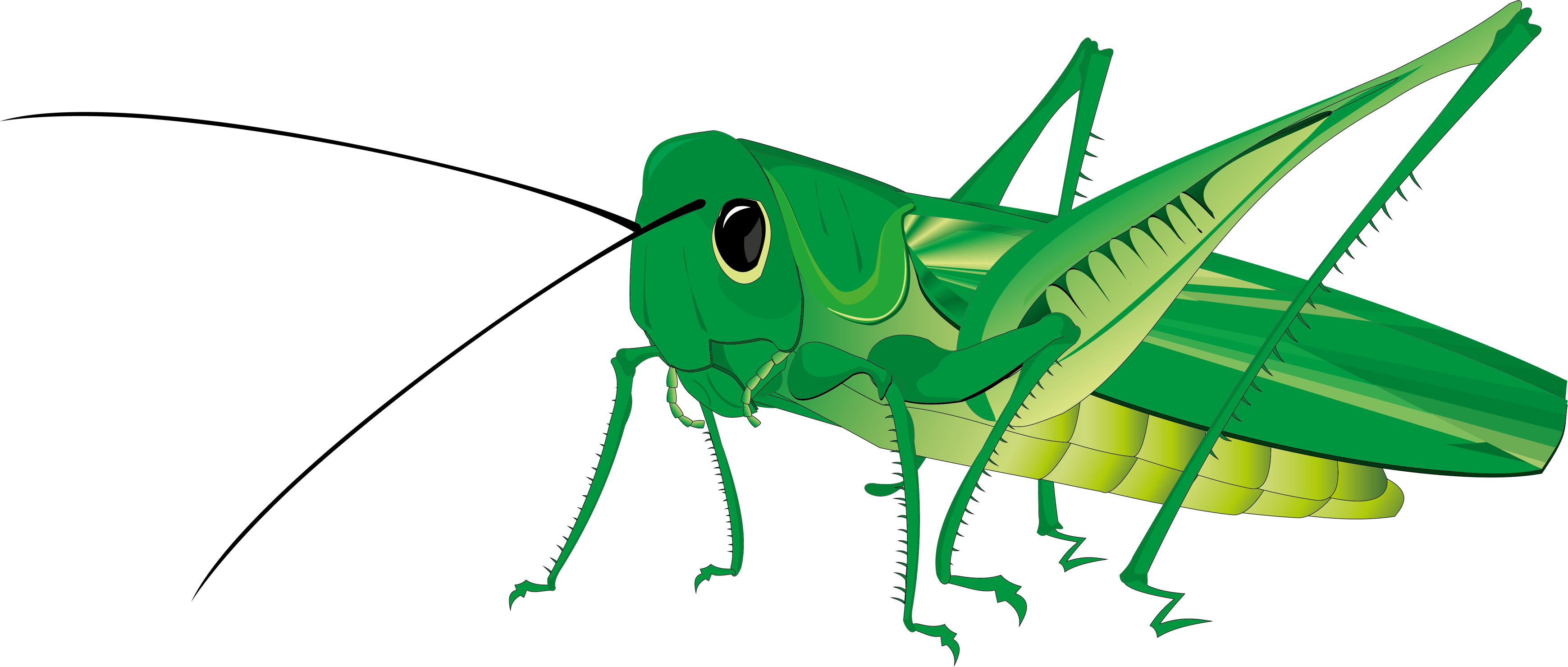 Insect legs png. Grasshopper