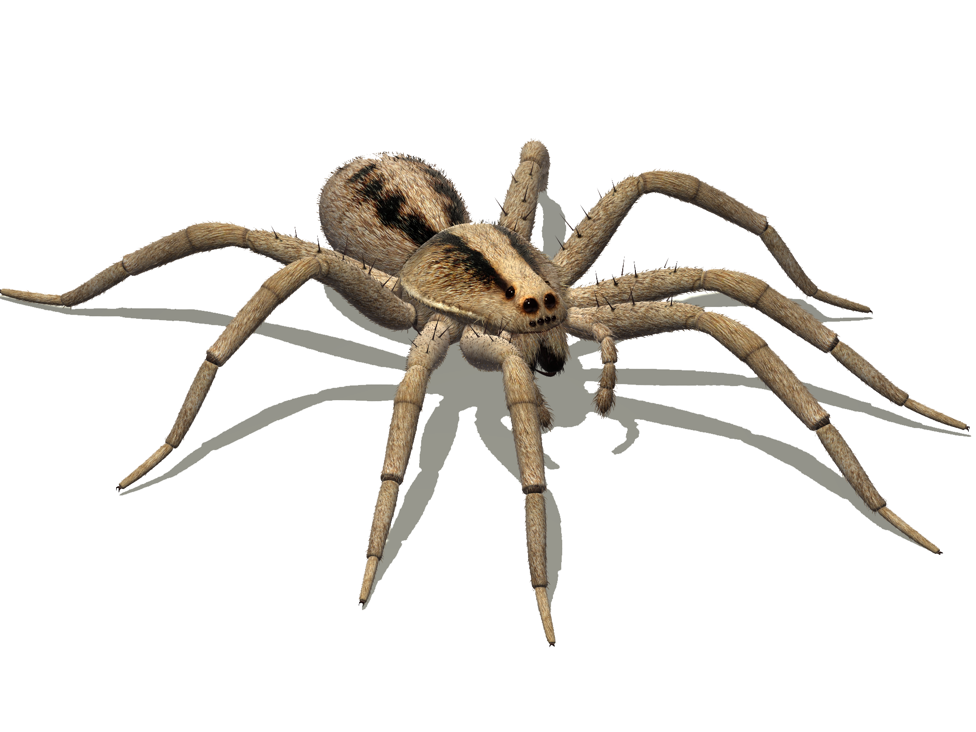 Insect legs png scary. Spider google search bugs