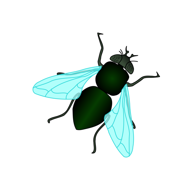 Drawing bugs arthropod. Housefly insect free commercial