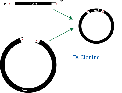 Ta cloning wikipedia creating. Pjet vector clipart library