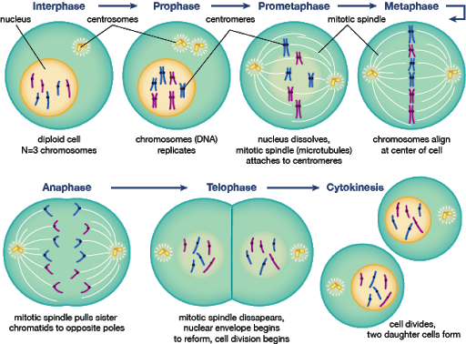 Interval vector interphase. True science now the