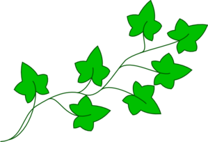 Ivy clipart. Free cliparts download clip