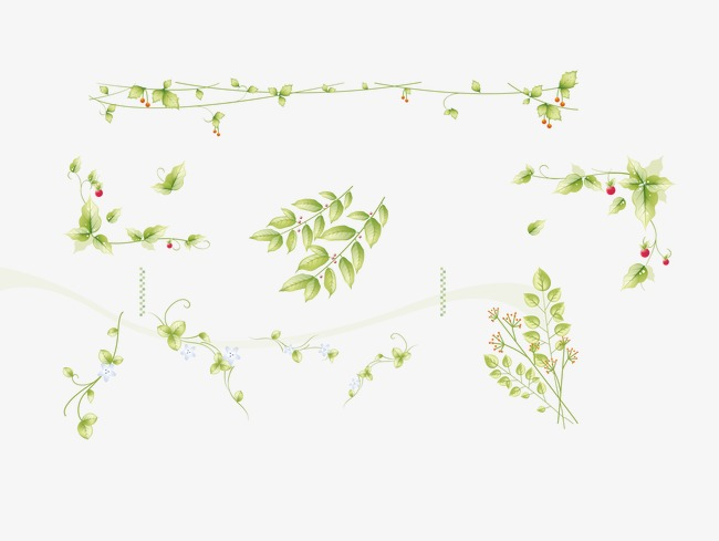 Floating leaves willow border. Ivy clipart curved picture transparent stock