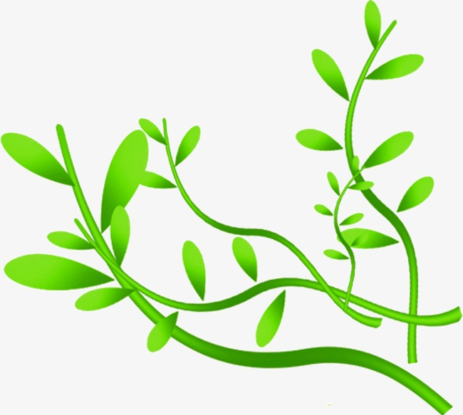 Branches of the vine. Ivy clipart curved banner transparent