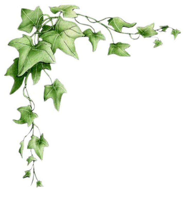 best housewarming images. Ivy clipart curved black and white stock