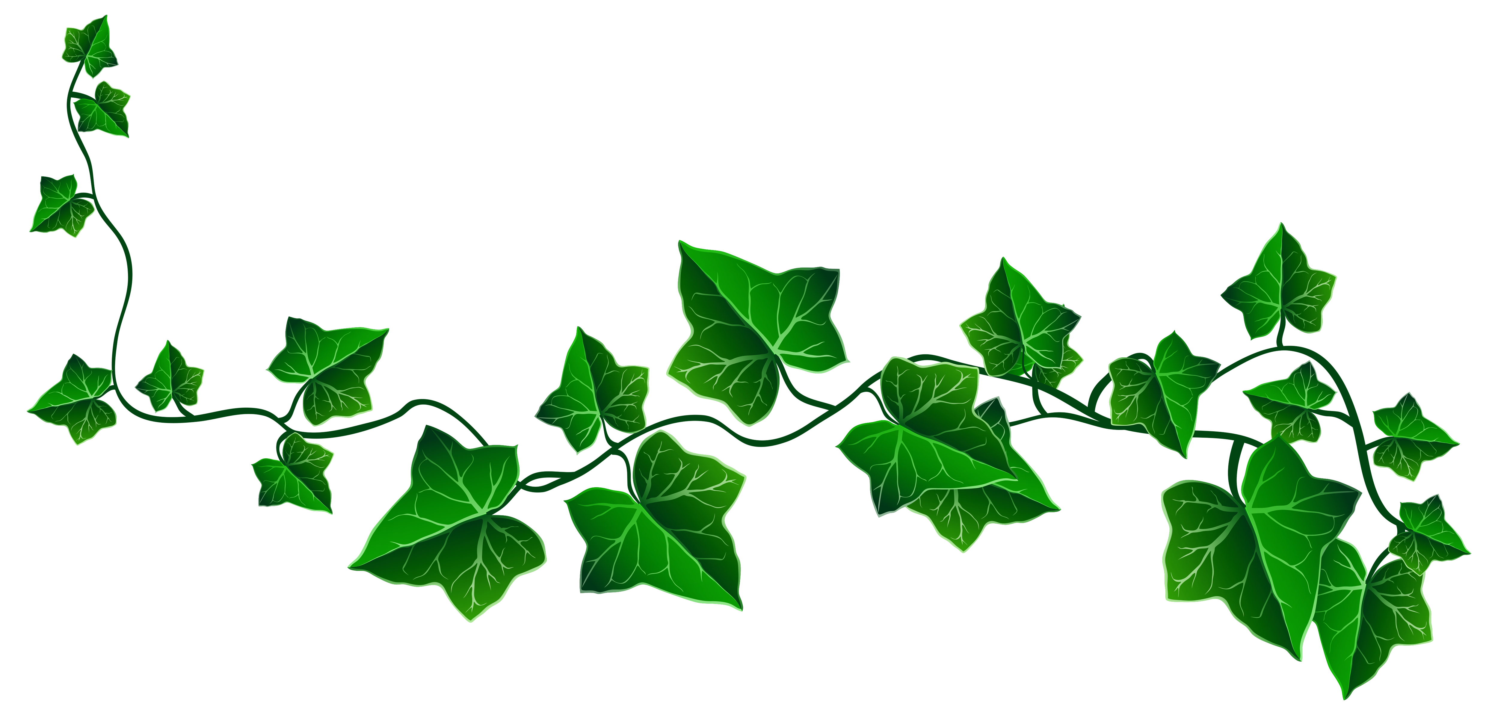 Free ivy cliparts download. Vine png clip royalty free library