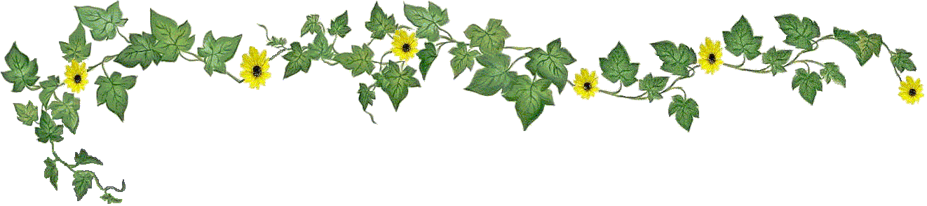 Ivy png. File banner city of