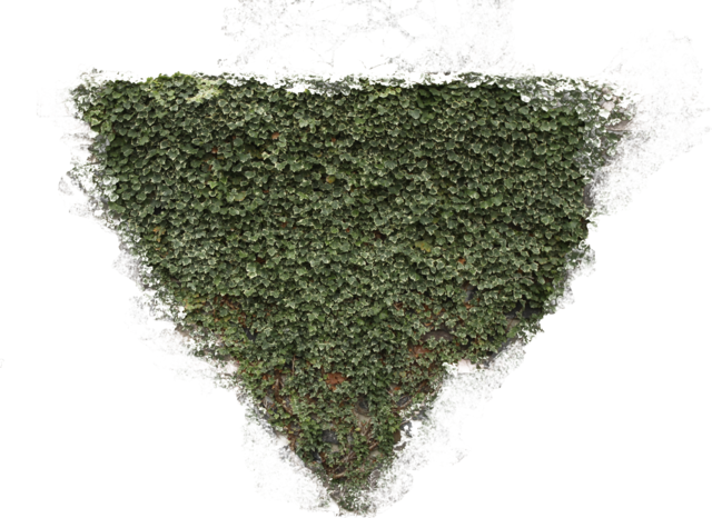 Ivy texture png. Environment textures show photos