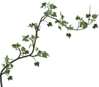 Ivy clipart free icons. Vine png picture stock