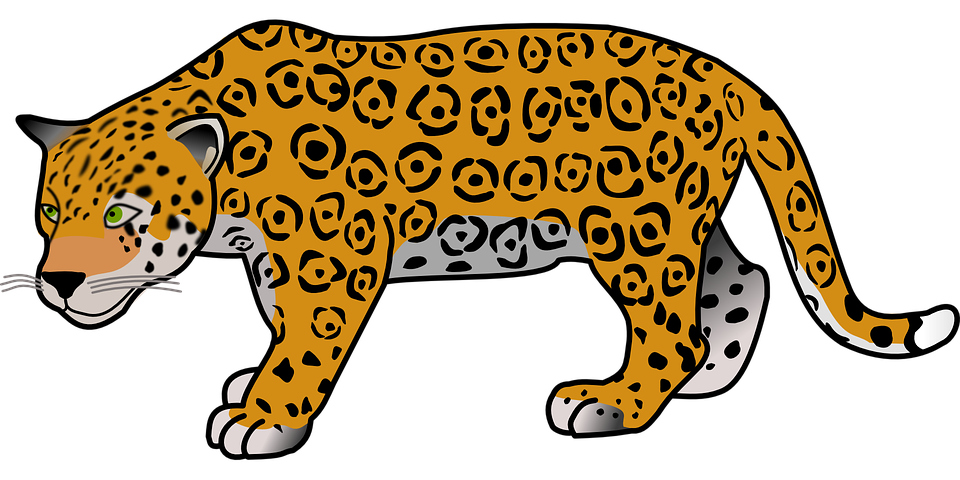 leopard transparent dangerous