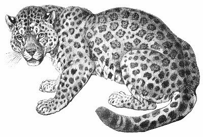 Jaguar clipart rainforest jaguar. Free page of public