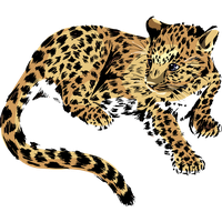 Jaguar clipart royalty free. Download category png and
