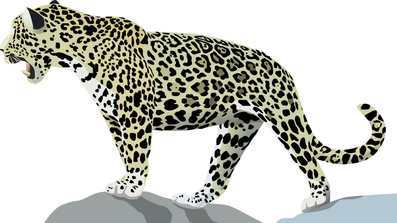 Jaguar clipart royalty free. Animal pictures org have