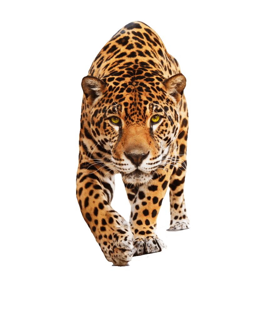 jaguar transparent