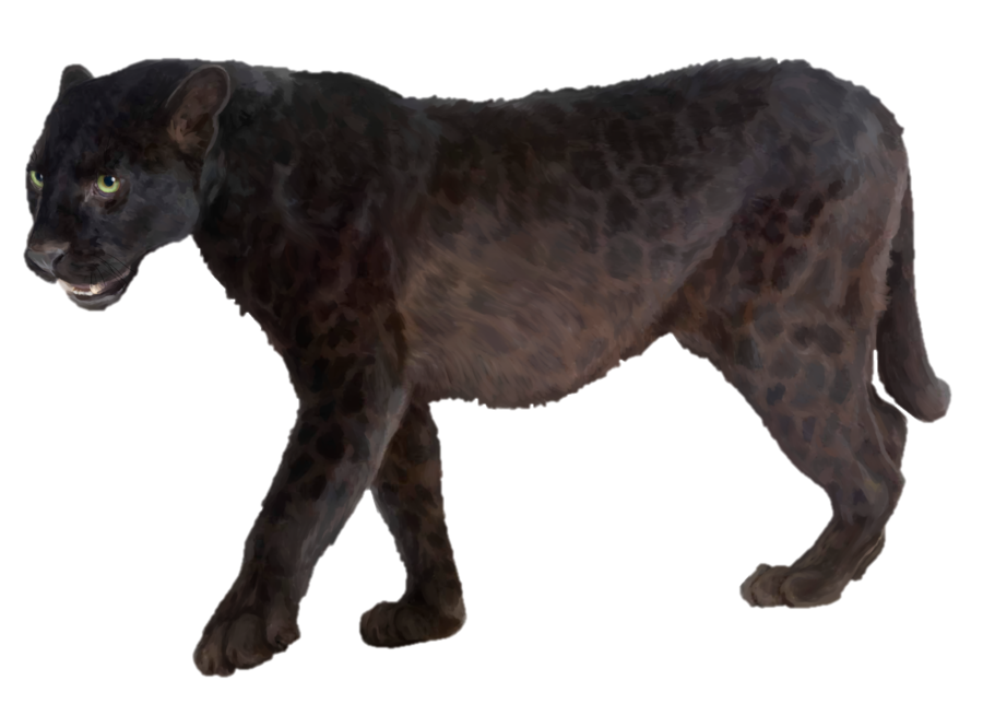 Panther walking png. Transparent images pngio