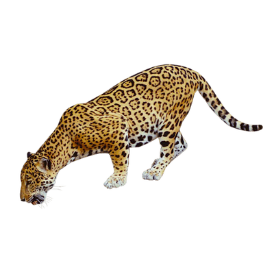 jaguar transparent cut out
